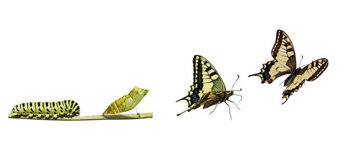 Transformer les ventes par une approche systémique